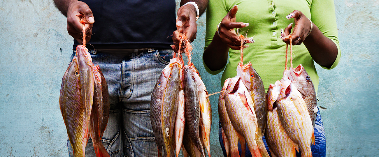 FishCatch1_1300X539
